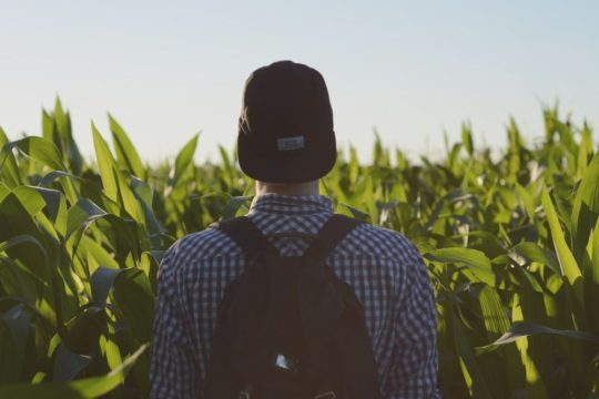 Man Standing in Cornfield