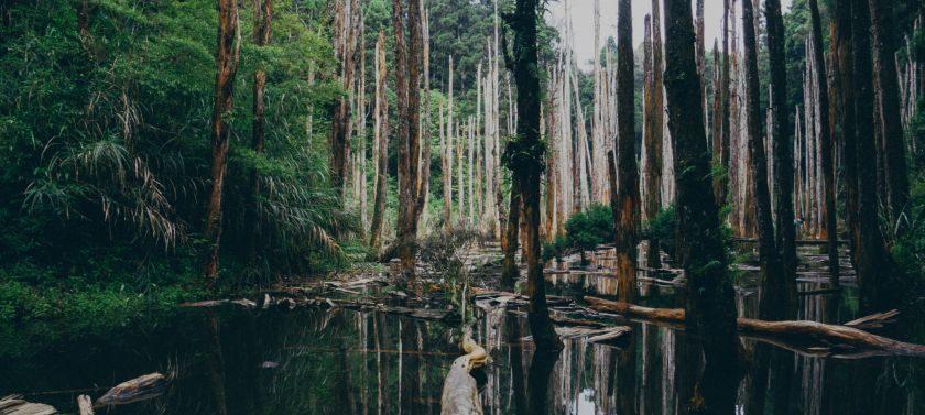 Swampy River